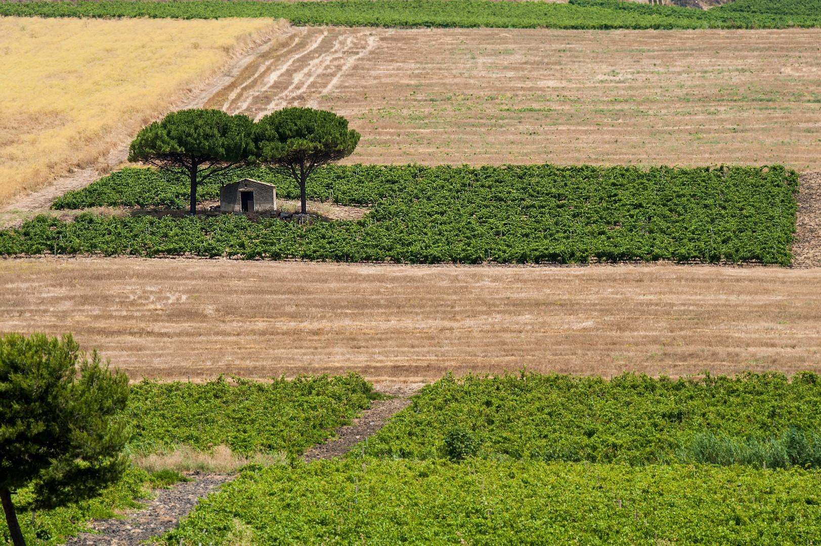 Firriato_Winery_Trapani_Countryside (7)
